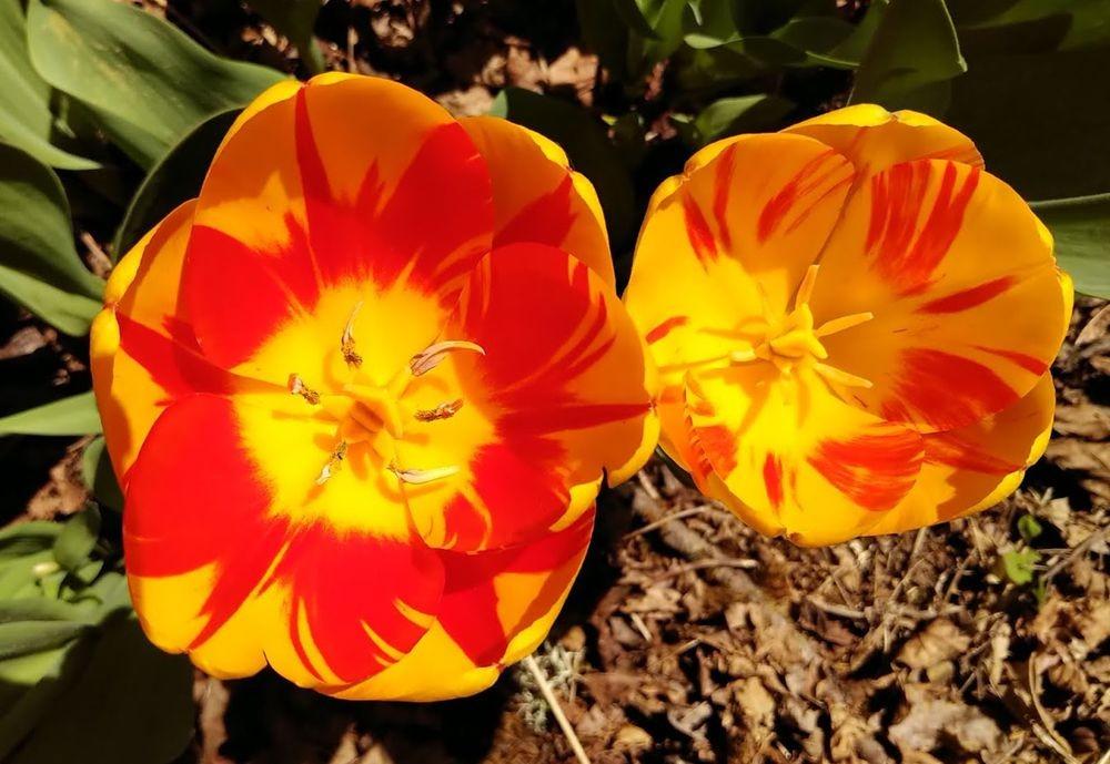 花卉日记之23_图1-5