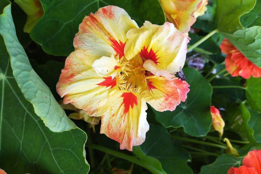 花卉日记之23_图1-7