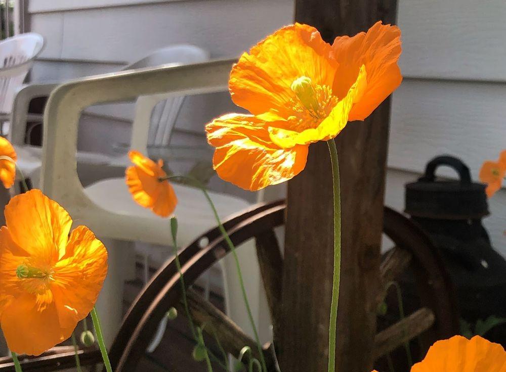 花卉日记之23_图1-9