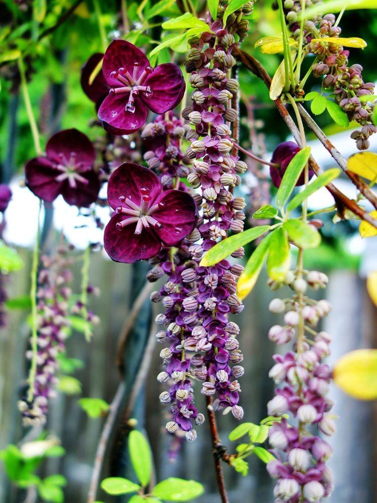 花卉日记之23_图1-20
