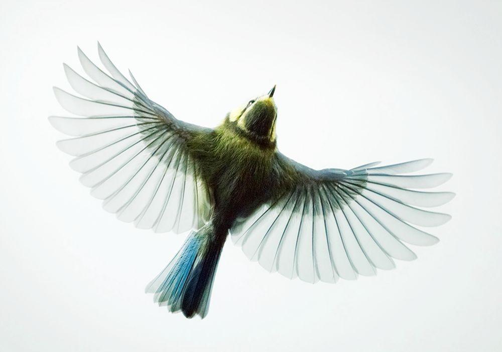 捕捉空中杂技鸟_图1-6