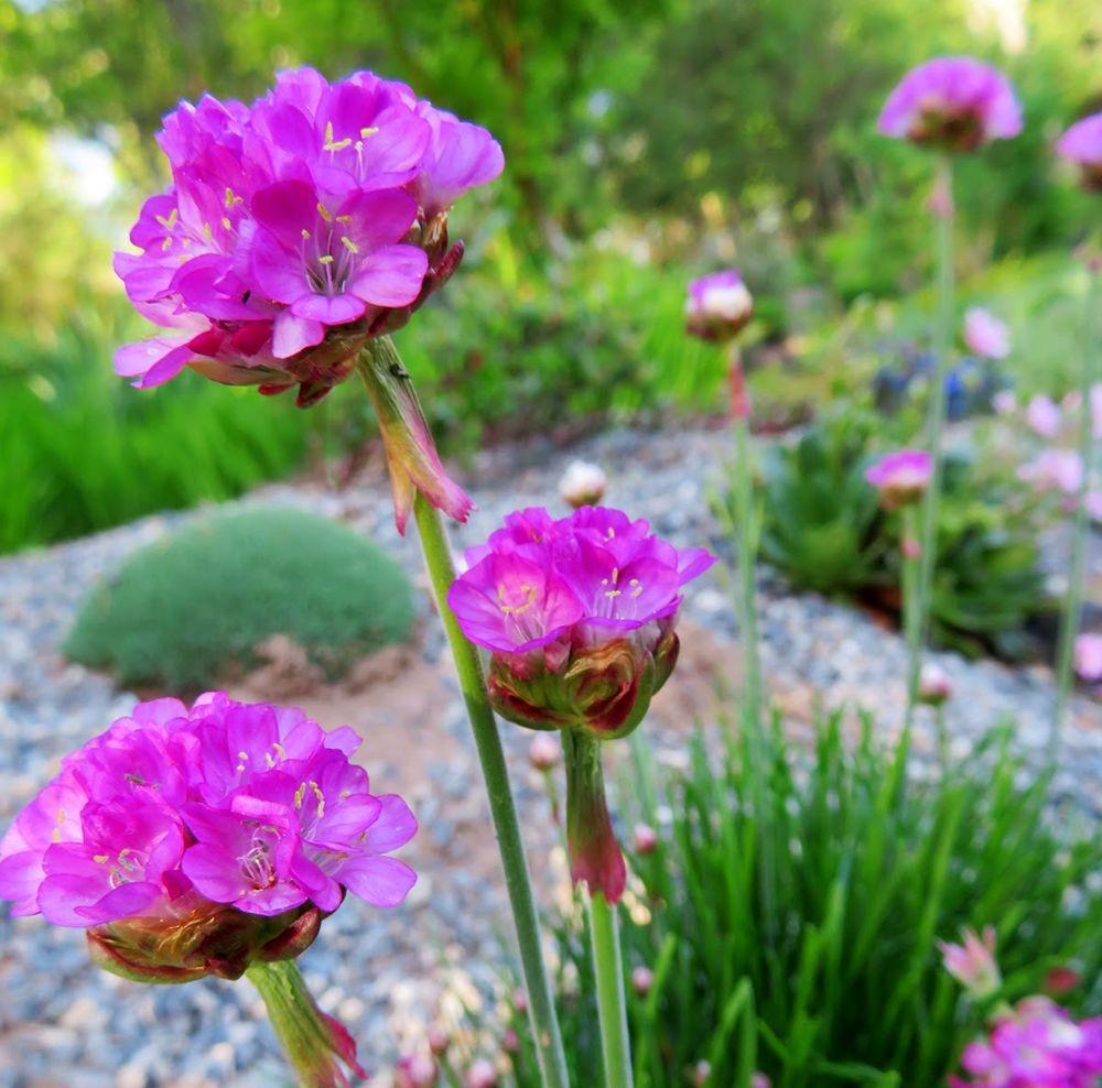 花卉日记-24_图1-1