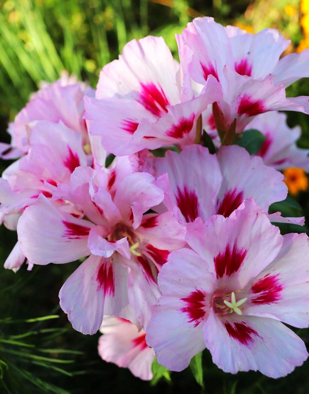 花卉日记-24_图1-2