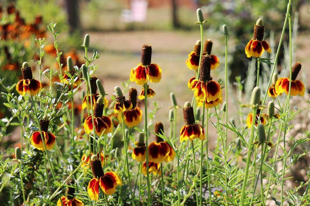 花卉日记-24_图1-10