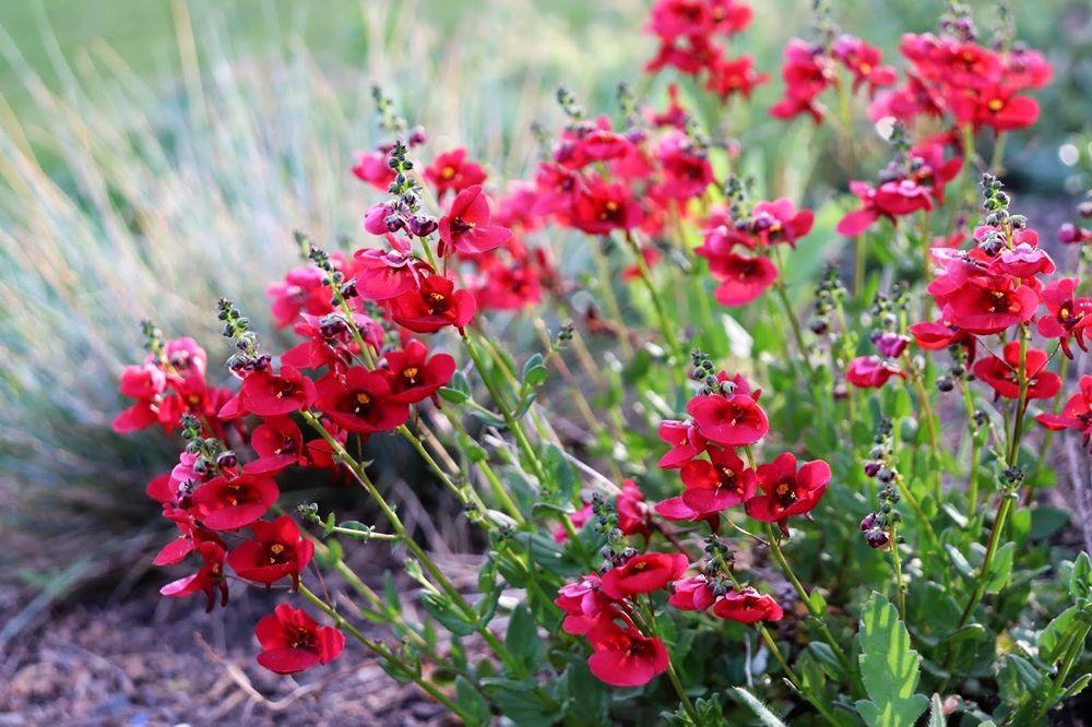 花卉日记-24_图1-13