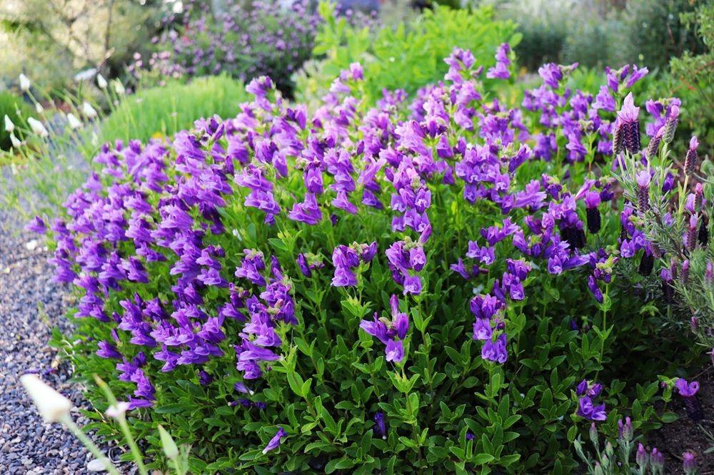 花卉日记-24_图1-17