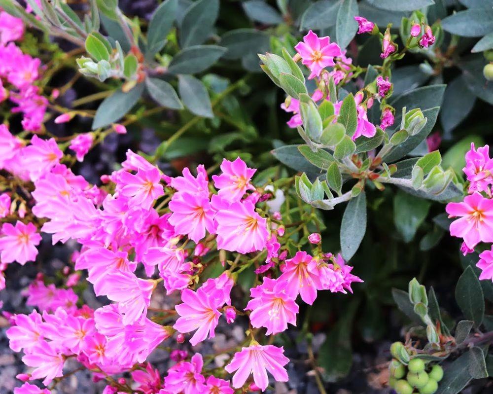 花卉日记-24_图1-18