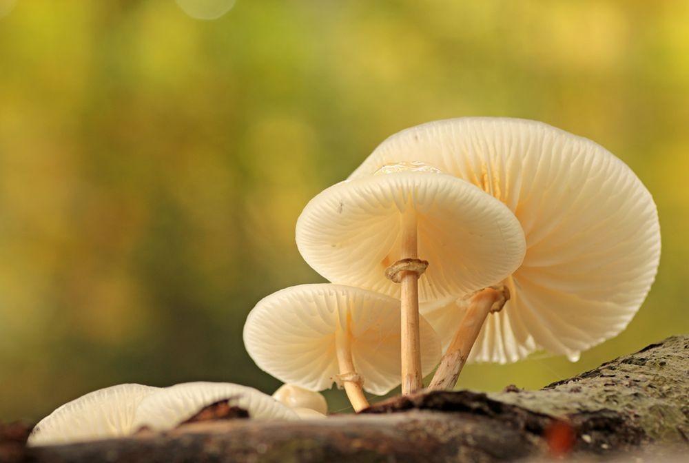 2020 蘑菇与真菌--3_图1-3