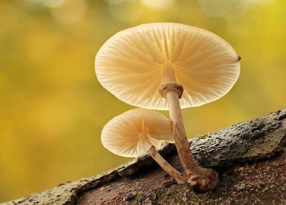 2020 蘑菇与真菌--3_图1-4