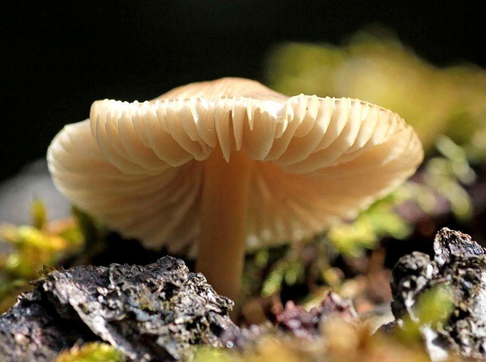 2020 蘑菇与真菌--3_图1-9