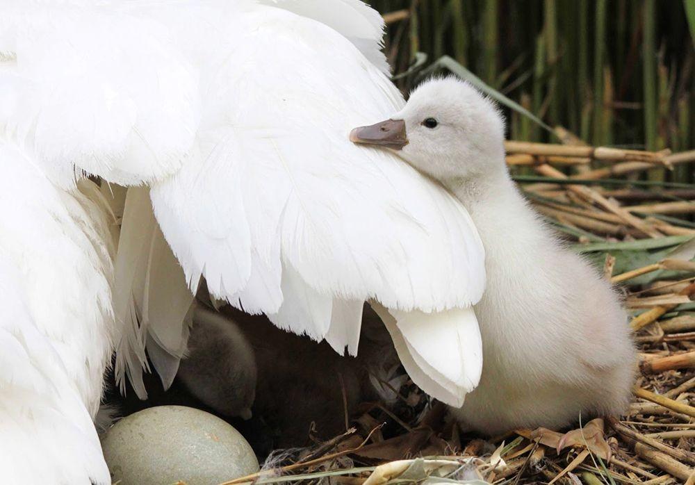 妈妈与宝贝---2_图1-8