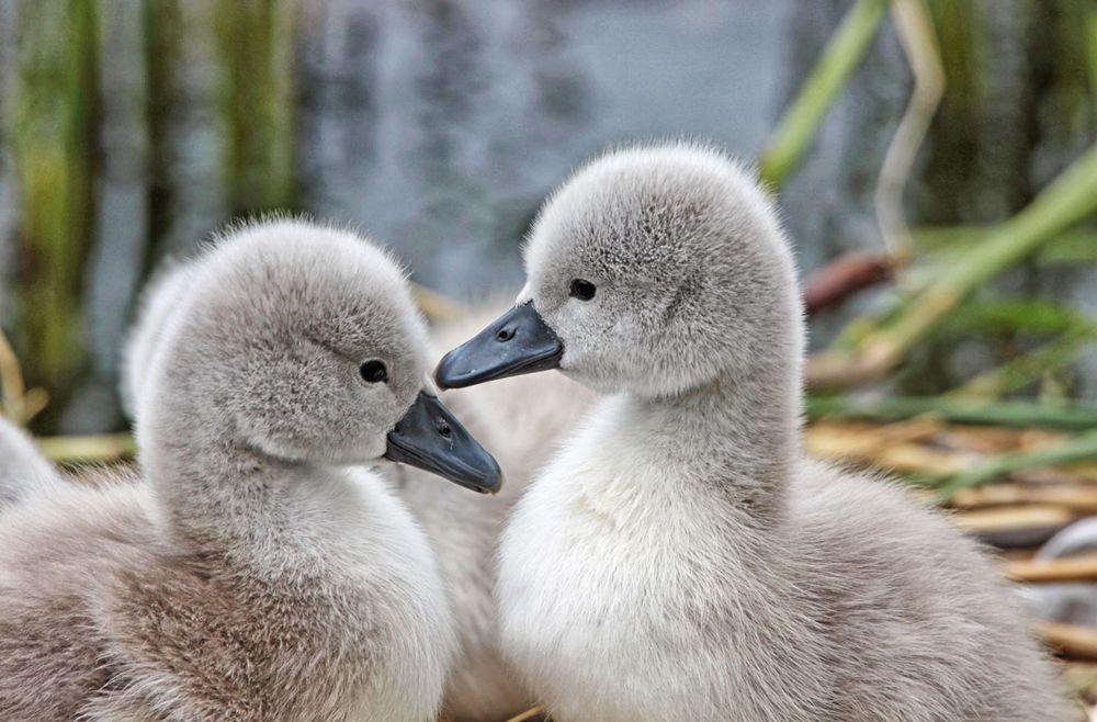 妈妈与宝贝---2_图1-13