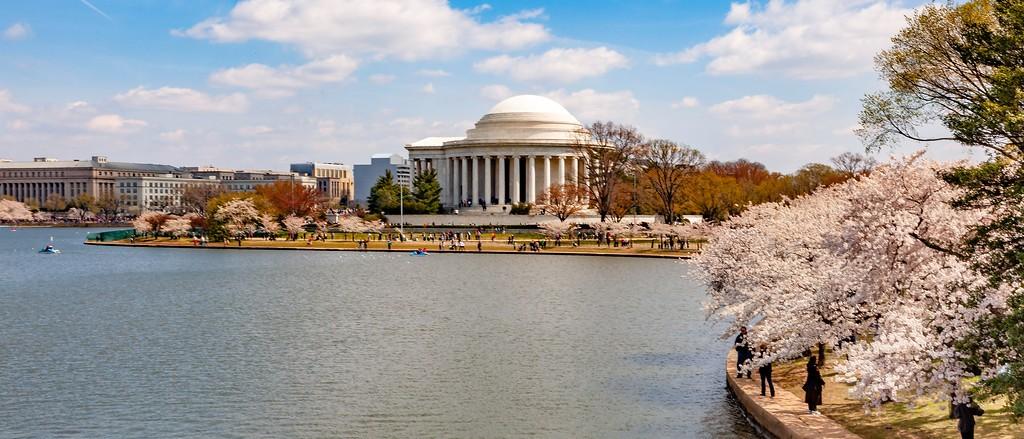 华盛顿樱花节,盛开的季节_图1-11
