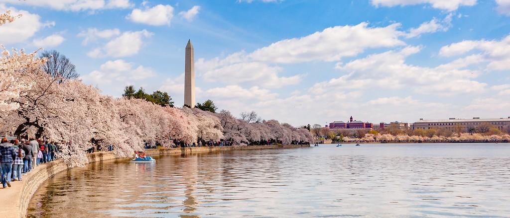 华盛顿樱花节,盛开的季节_图1-6