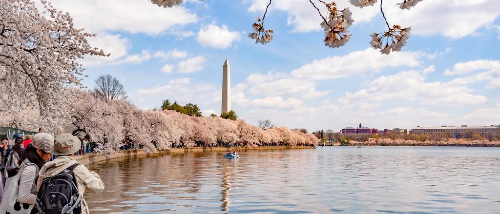 华盛顿樱花节,盛开的季节_图1-10