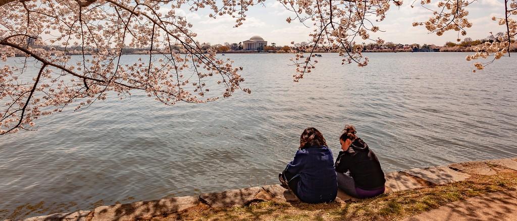 华盛顿樱花节,盛开的季节_图1-4