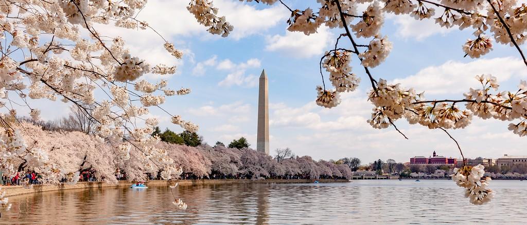 华盛顿樱花节,盛开的季节_图1-1