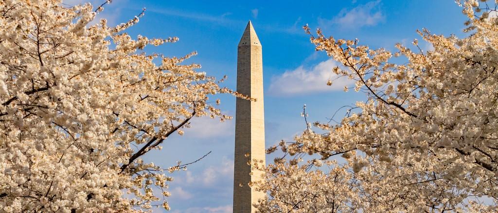 华盛顿樱花节,盛开的季节_图1-13