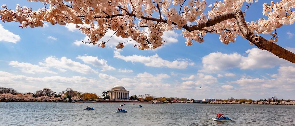 华盛顿樱花节,盛开的季节_图1-20