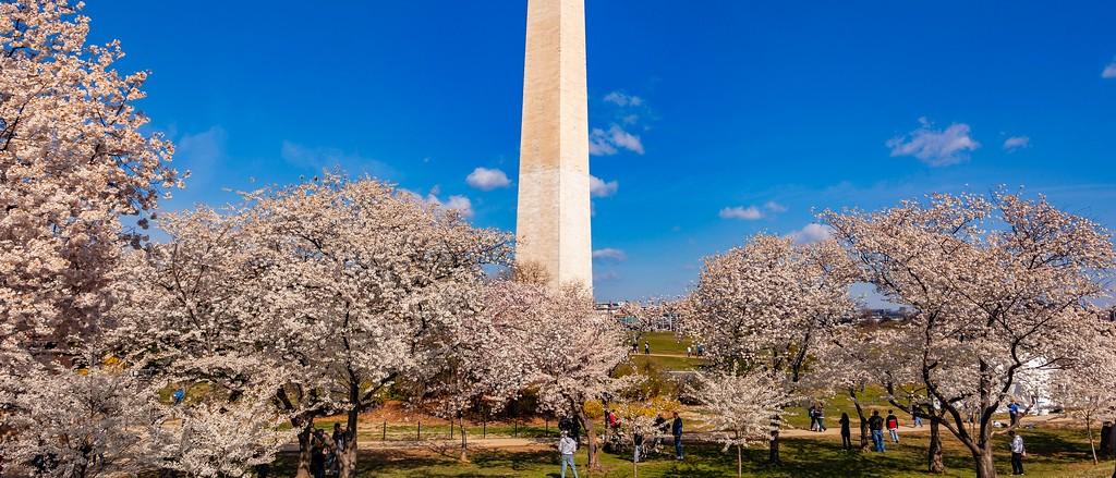 华盛顿樱花节,盛开的季节_图1-16