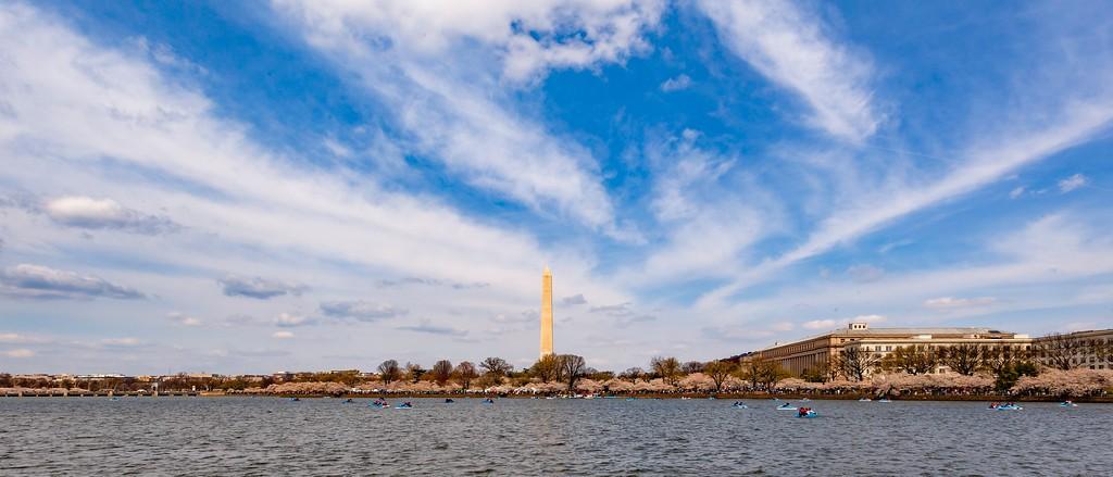 华盛顿樱花节,盛开的季节_图1-17