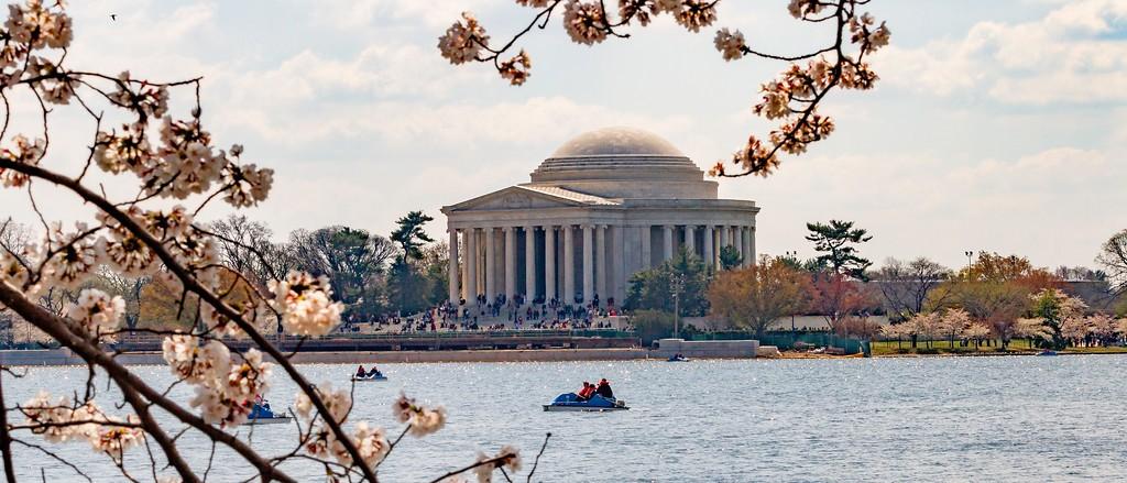 华盛顿樱花节,盛开的季节_图1-19