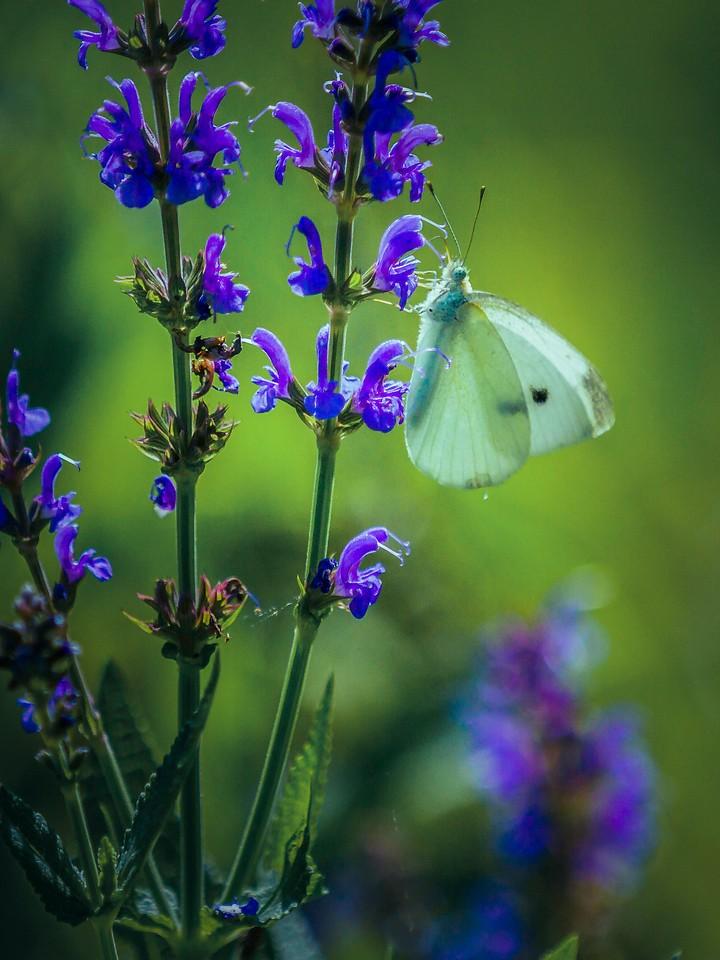 彩蝶,翩翩起舞_图1-1