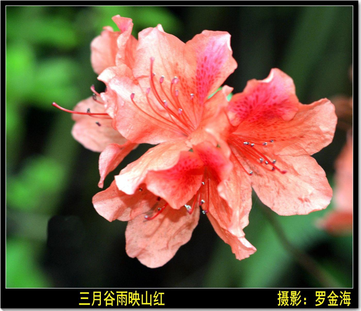 三月谷雨诗词记_图1-1