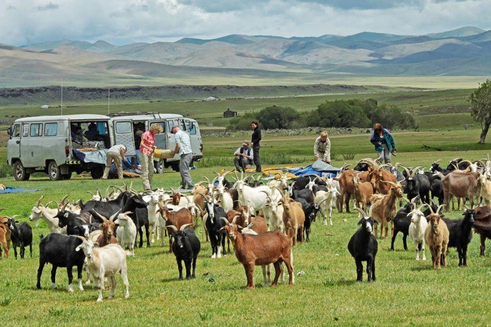 访问蒙古--2_图1-7