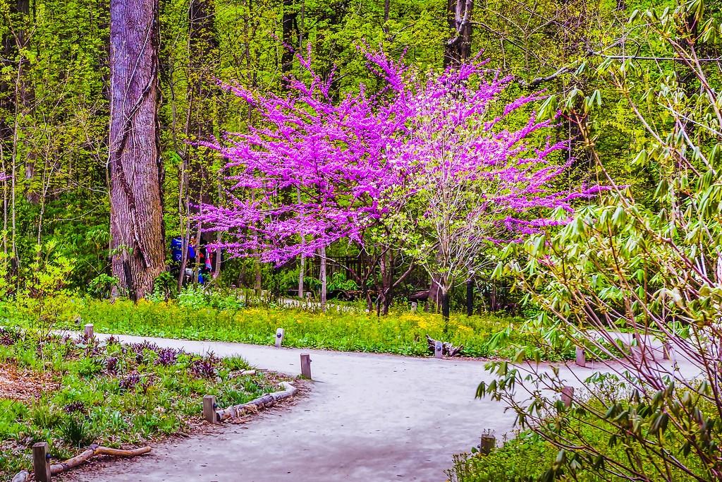 宾州长木公园,盛开的郁金香_图1-8