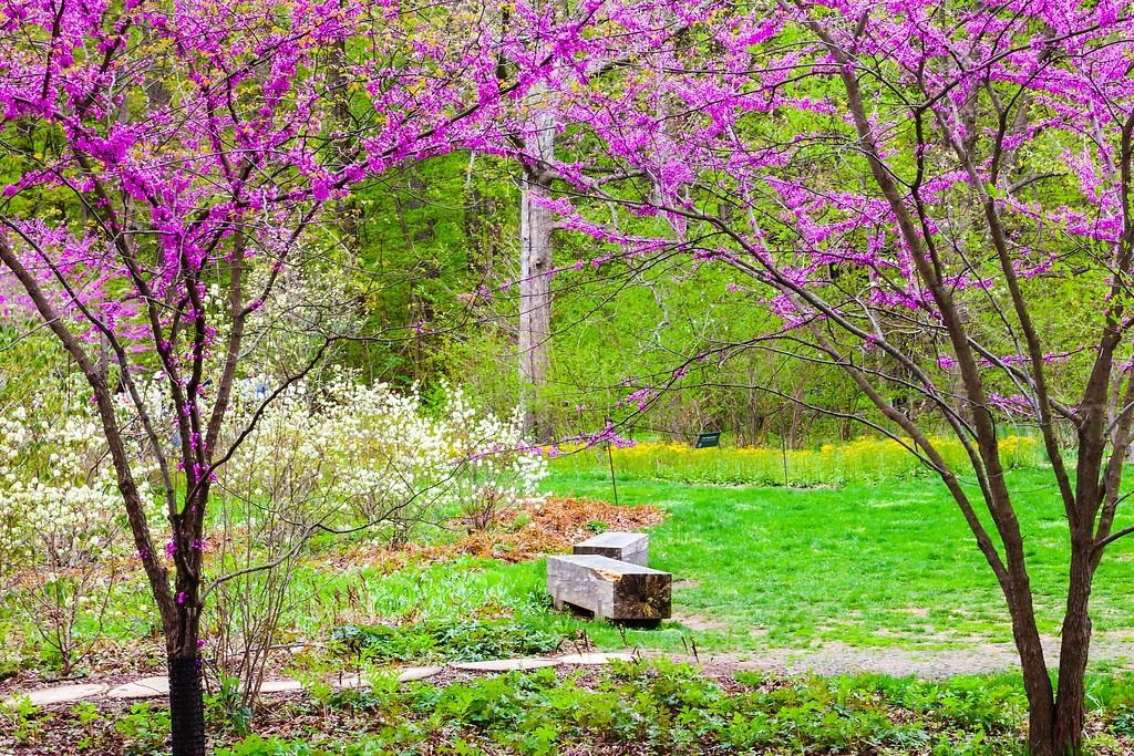 宾州长木公园,盛开的郁金香_图1-2