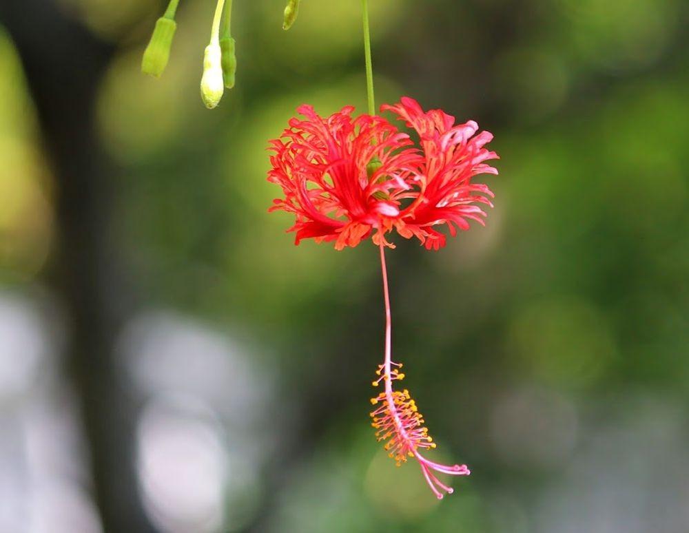 花卉日记---27_图1-9
