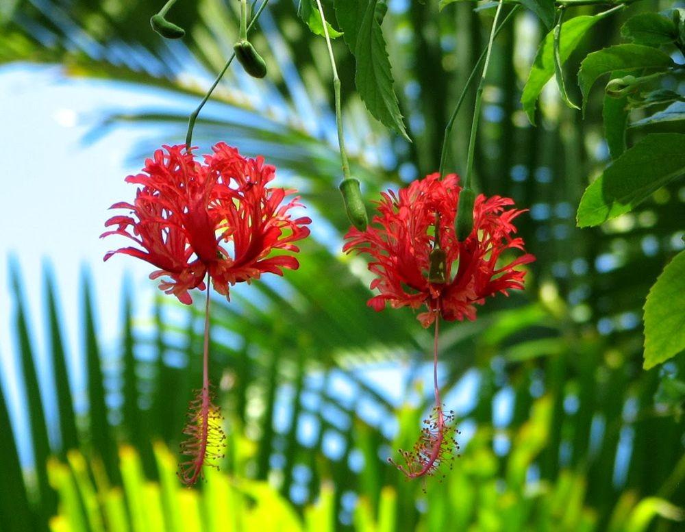 花卉日记---27_图1-11