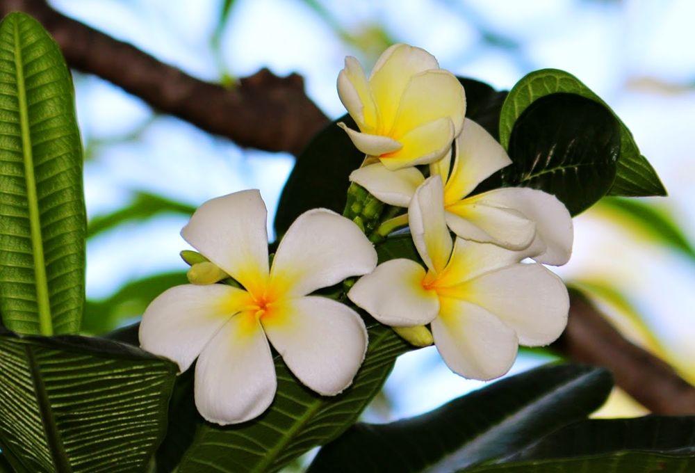 花卉日记---27_图1-15