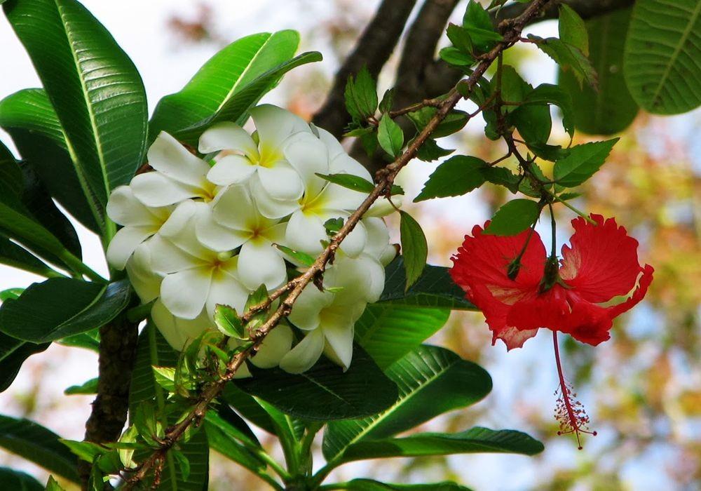 花卉日记---27_图1-16