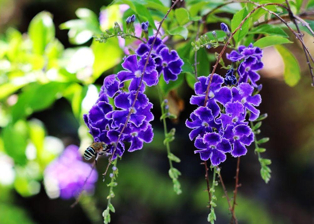 花卉日记---27_图1-18