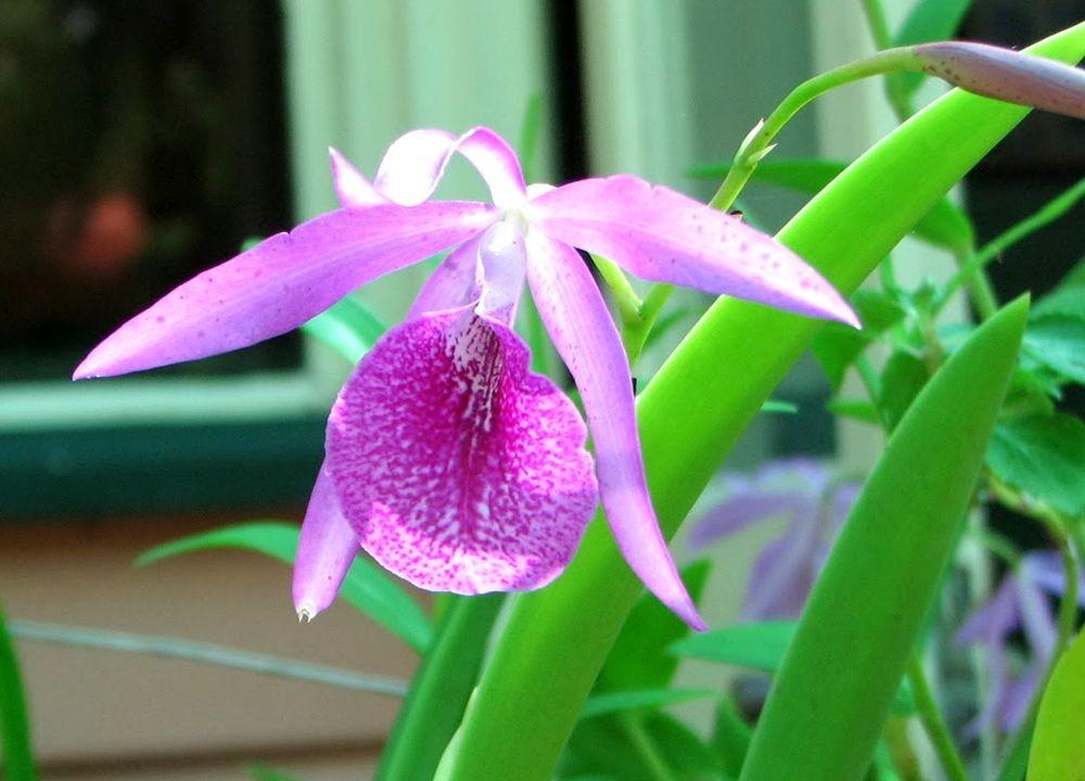 花卉日记---27_图1-20