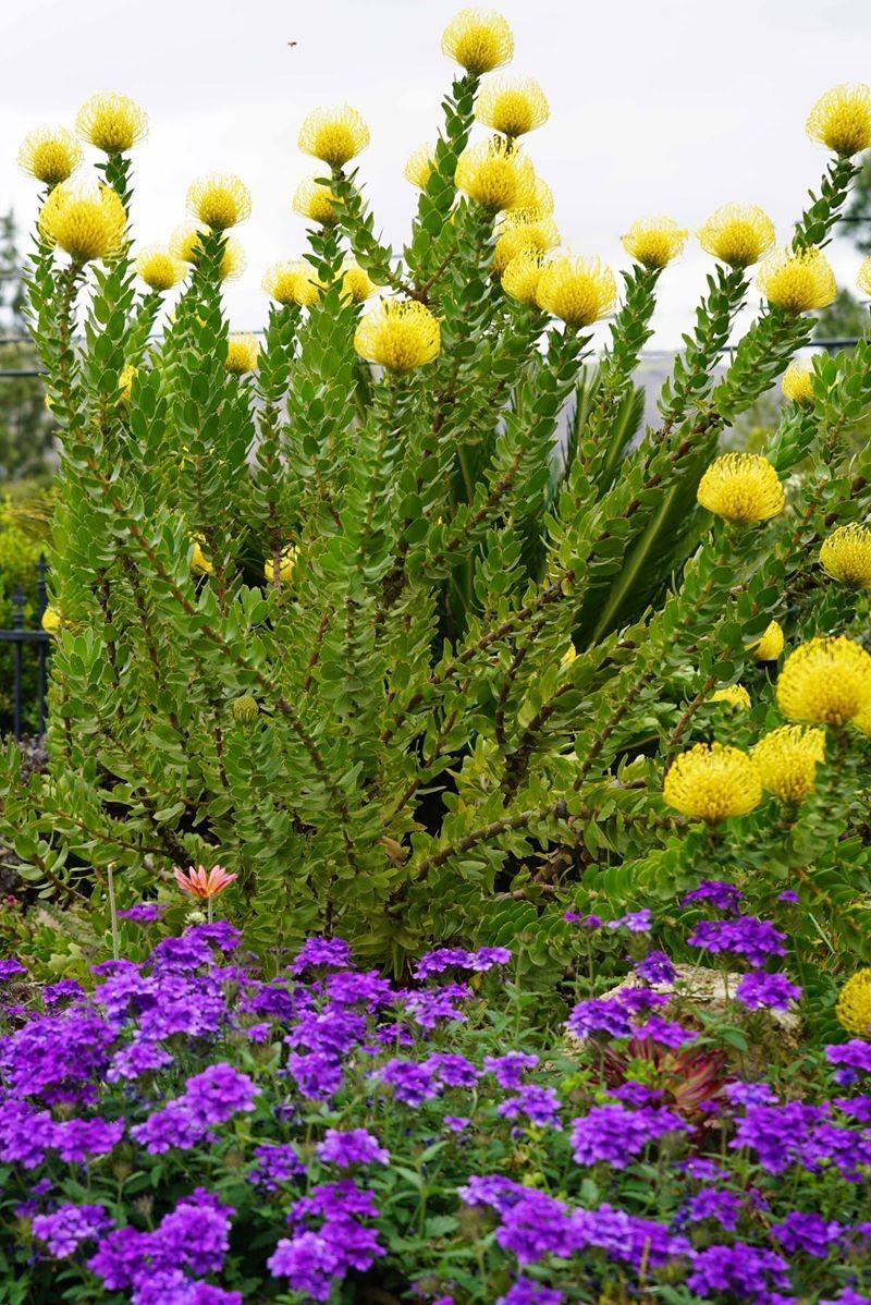 花卉日记---29_图1-2