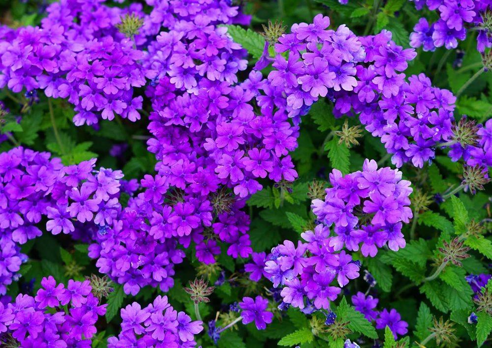 花卉日记---29_图1-3