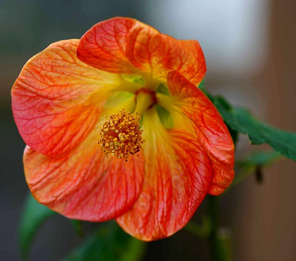 花卉日记---29_图1-6