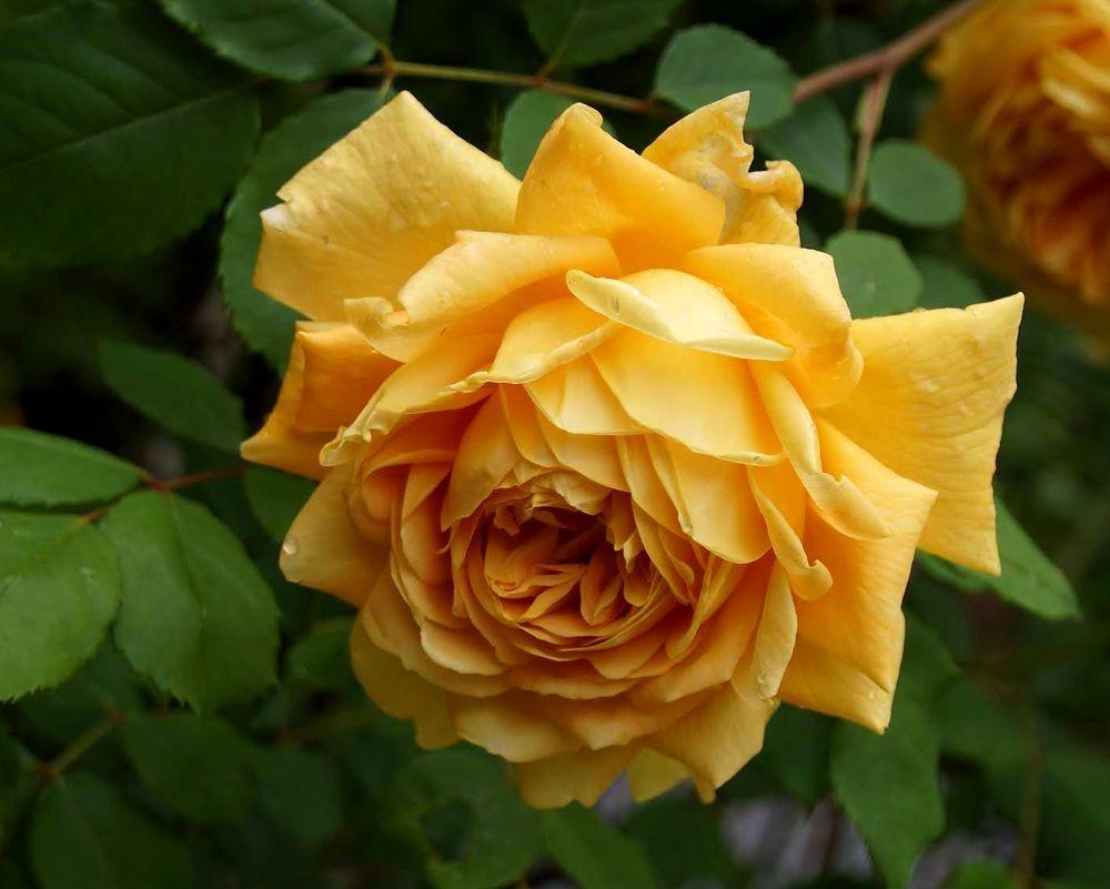 花卉日记---29_图1-17