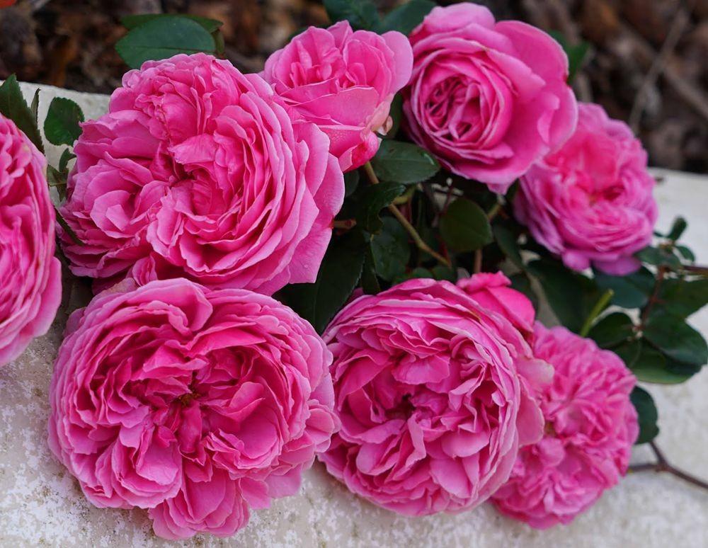 花卉日记---29_图1-18