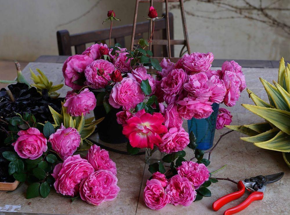 花卉日记---29_图1-19
