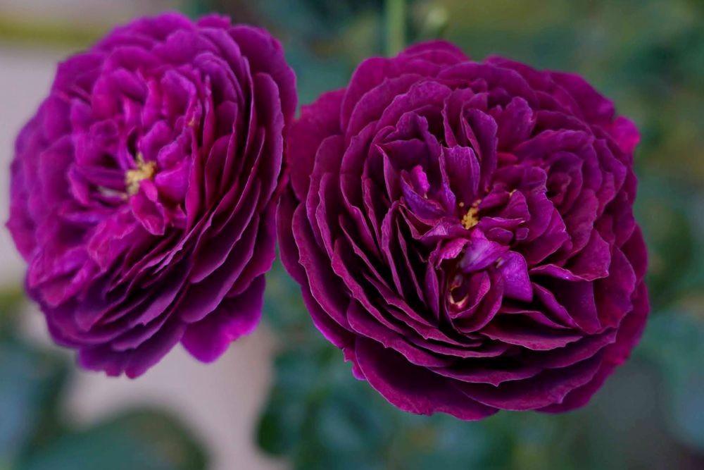 花卉日记---29_图1-26