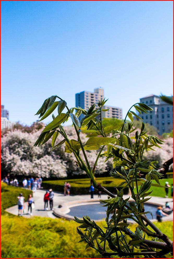 四月逢春花争艳_图1-14