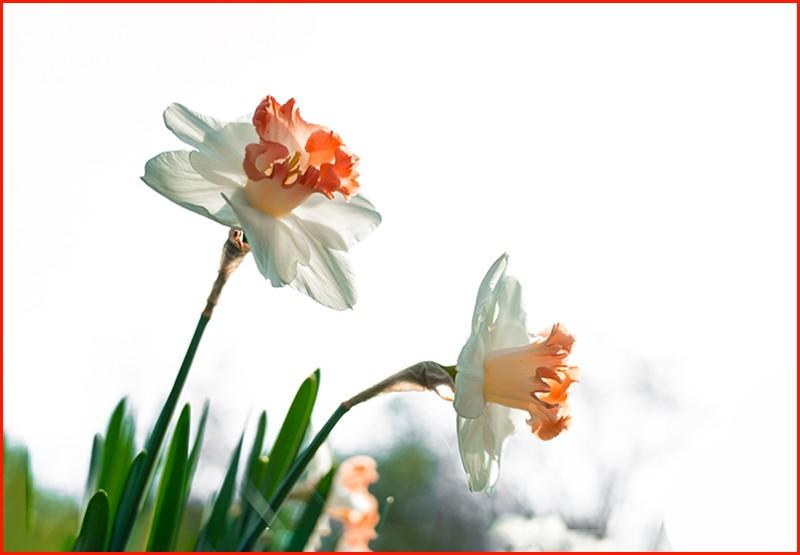 四月逢春花争艳_图1-27