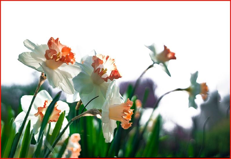 四月逢春花争艳_图1-38