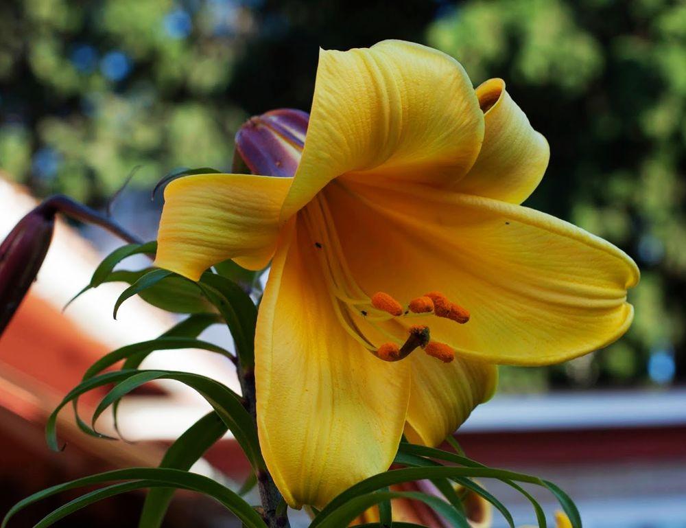 花卉日记---30_图1-2