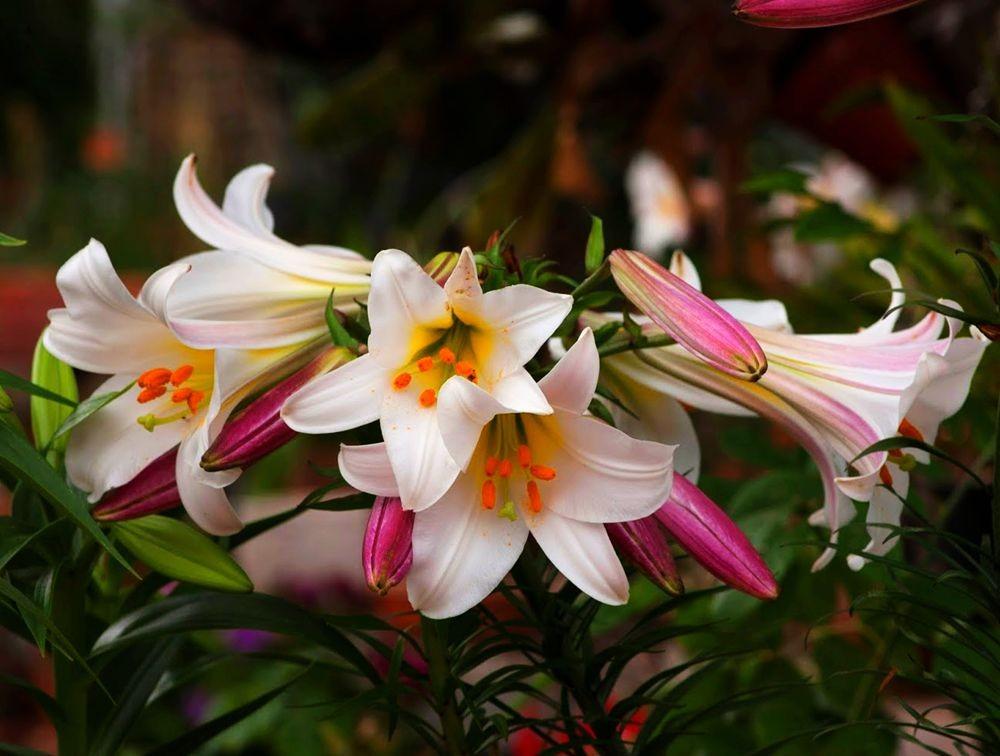 花卉日记---30_图1-5