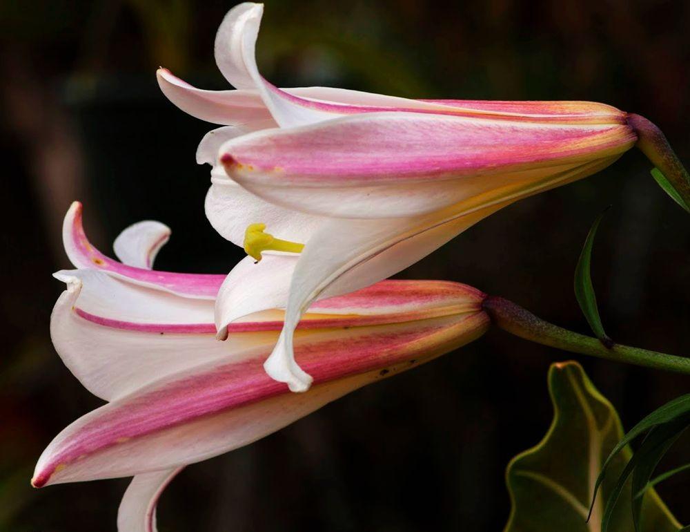 花卉日记---30_图1-6